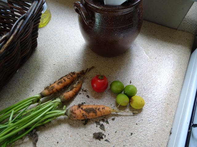 Todays harvest. Carrots, tiny lime and a normal sized tomato. We have all sizes but it seems like the small ones are most proliferate.